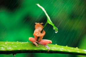 frog-with-an-umbrella